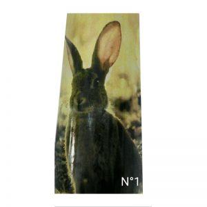teja-1-conejos-cinegetica-la-mancha